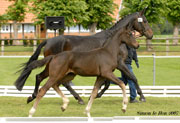 July / August 2010 – News from our broodmares